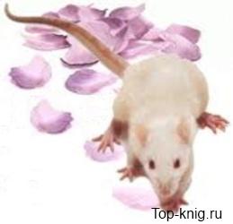 Cveti-dlja-Eldzhernona